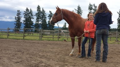 Life Coach Sandy Mills Equine Assisted Learning